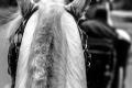 Konjski život